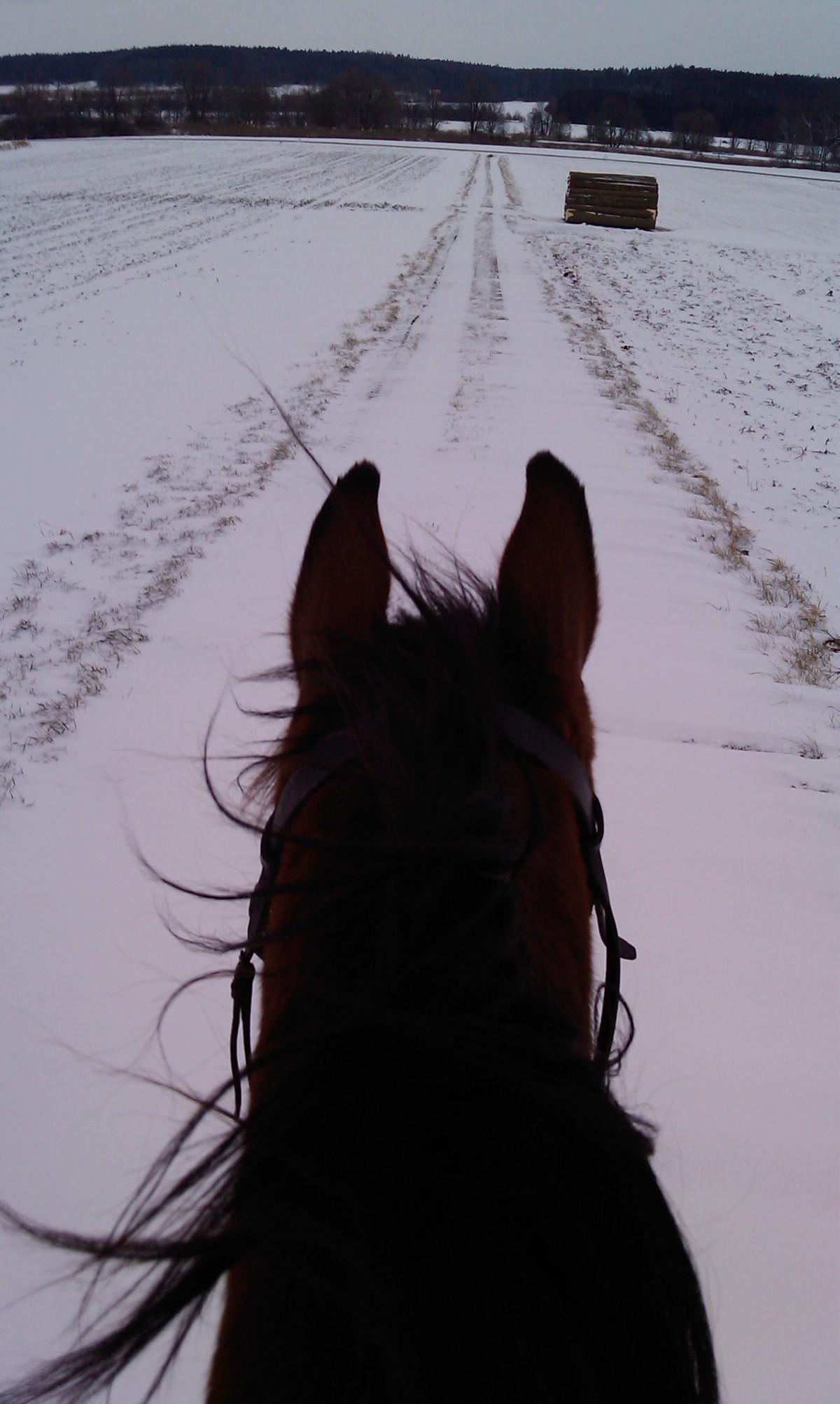 Reiten: Im Schnee