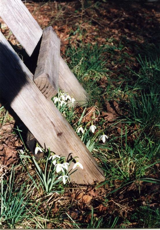 Endlich … es wird Frühling!