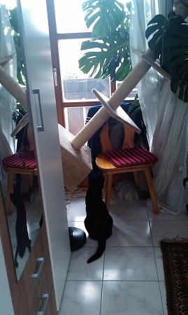 Katzenkratzbaumbau