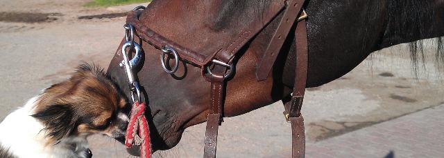 Umzug: Mit dem Pferd von München an den Niederrhein