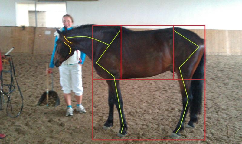 Körperaufteilung und Winkelungen