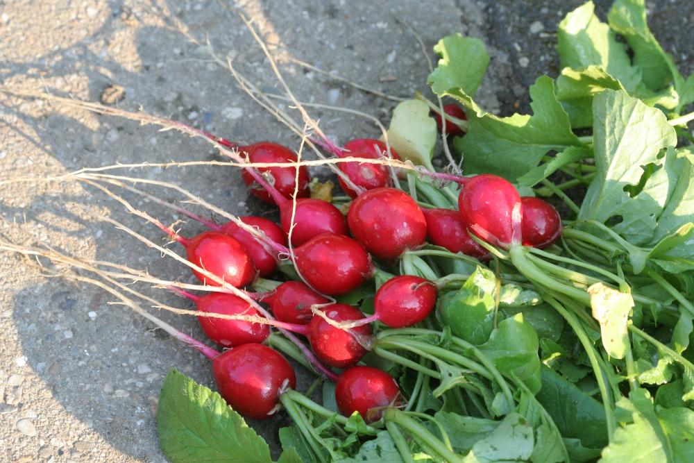 Garten: Die erste Ernte