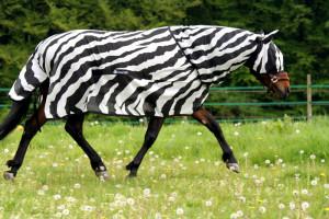 Gut geschützt im Zebra-Look