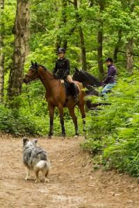 Wenn Reiter und Hund sich im Wald begegnen ... in diesem Fall gehören Hund und Reiter zusammen