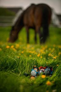 Die Amigurumi-Pferde-Herde ist bereits erfolgreich angegrast.